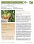 Tomato Grafting Fact Sheet
