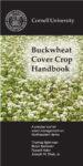 Download the Buckwheat cover crop handbook in PDF format