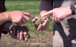 Hands holding soil