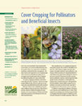 cover crops for pollinators and beneficial insects
