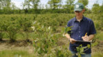 Enhancing Crop Yield Through Wild Pollinators cover