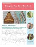 Cover for European Corn Borer in Hops fact sheet
