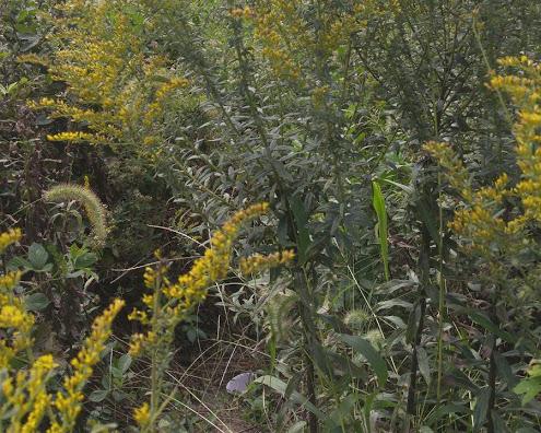 drainage ditch plant diversity
