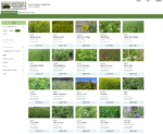 Screen shot of Northeast cover crop decision tool